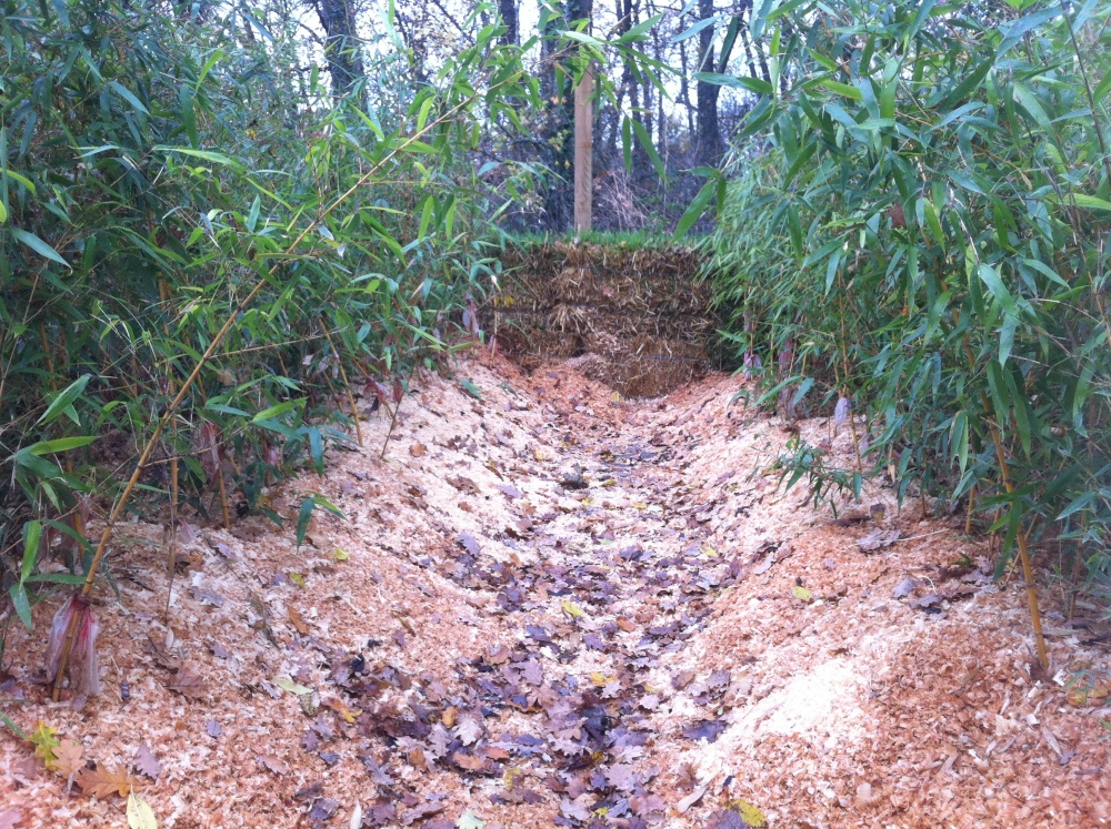 Protection hivernale des bambous en pots (2/2)