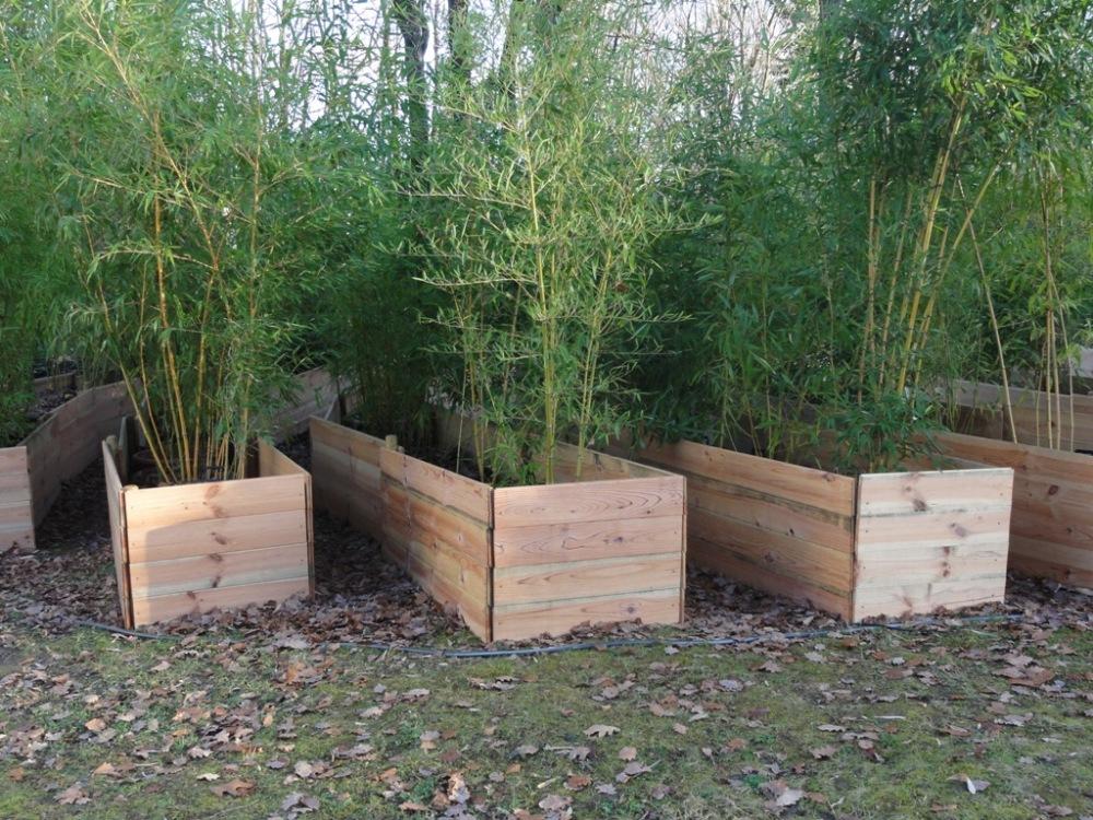 Protection hivernale des bambous en pots (1/2)