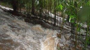 C'était un petit chemin sous les bambous géants