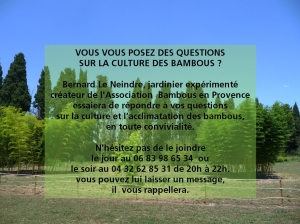 VOUS VOUS POSEZ DES QUESTIONS<br /> SUR LA CULTURE DES BAMBOUS ? Bernard Le Neindre, jardinier expérimenté créateur de l'Association  Bambous en Provence essaiera de répondre à vos questions sur la culture et l'acclimatation des bambous, en toute convivialité. N'hésitez pas de le joindre le jour au 06 83 98 65 34  ou le soir au 04 32 62 85 31 de 20h à 22h. vous pouvez lui laisser un message, il  vous rappellera.