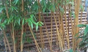 Barrière Bambou