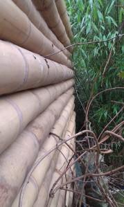 Gros plan barrière bambou