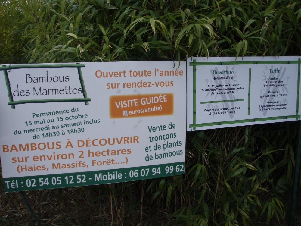Vente bambousaie (Fontguenand, 36600 Valençay) (4/6)