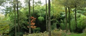 bambous plantés en forêt DSCN8428