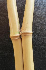 13. Séparation nette au dessus d'un nœud