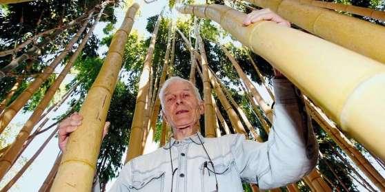 bun-reve-realise-michel-bonfils-au-milieu-des-bambous-geants-qui-peuvent-atteindre-16-a-17-metres-de-haut-span-style-text-transform-uppercase-photo-jean-christophe-sounalet-span-b